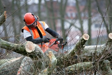 Tree Removals & Felling
