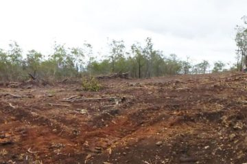 Plot Grass and Bush Clearing